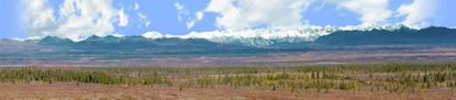 Picture of Alaskan denali national park left